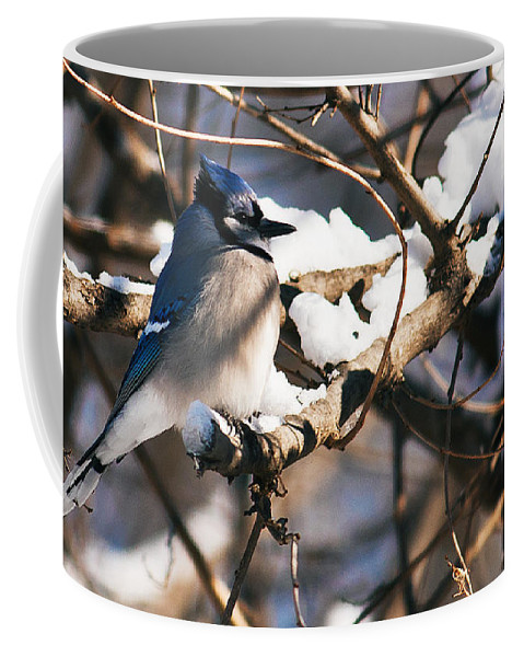 Heron Haven Coffee Mug featuring the photograph Blue Jay Staying Warm by Edward Peterson