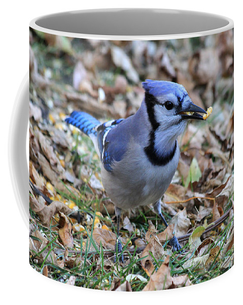 blue Jay Coffee Mug featuring the photograph Blue Jay With A Piece Of Corn In Its Mouth by Lori Tordsen