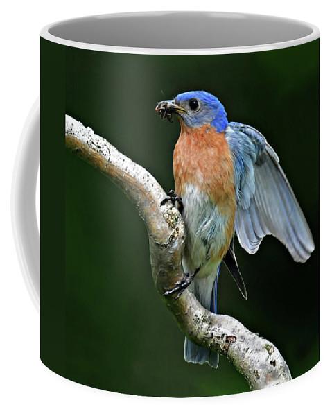 Bluebird Coffee Mug featuring the photograph Bluebird by Dave Mills