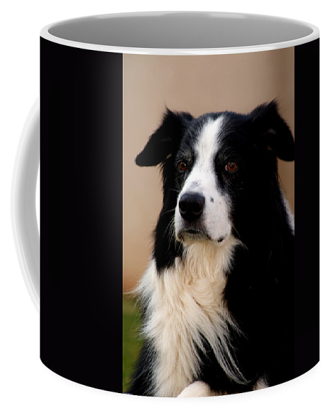 Border Collie Coffee Mug featuring the photograph Border Collie Dog by Tracey Beer