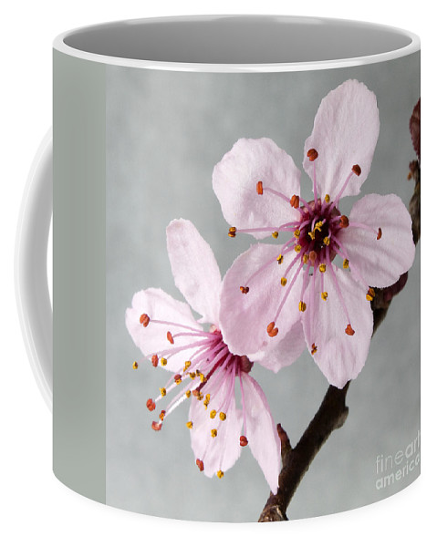 Cherry Blossoms Coffee Mug featuring the photograph Botanical II by David Vockeroth