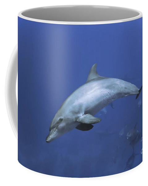 Dolphins Coffee Mug featuring the photograph Bottlenose Dolphin by Tom Peled