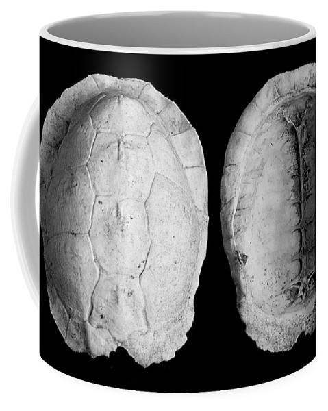 Photography Coffee Mug featuring the photograph Box Turtle Shell by Frederic A Reinecke
