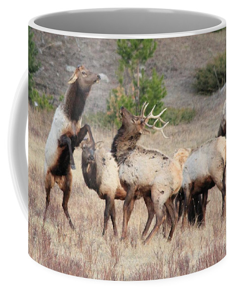 Elk Coffee Mug featuring the photograph Boxing Match by Shane Bechler
