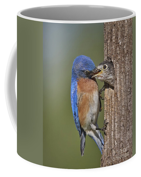 Animals Coffee Mug featuring the photograph Breakfast Is Now Being Served. by Susan Candelario