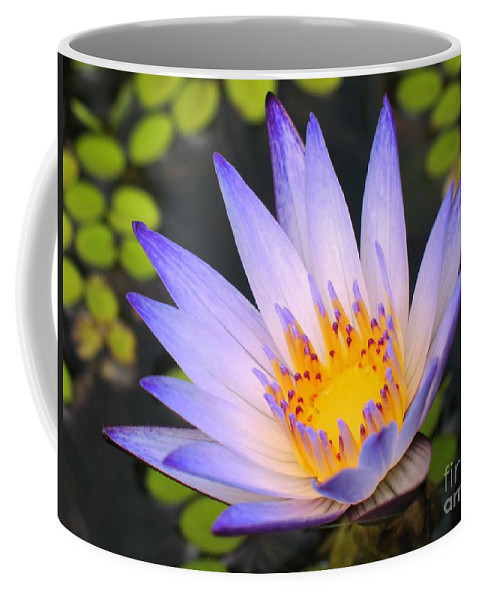 Water Coffee Mug featuring the photograph Bright Blue Water Lily by Yali Shi