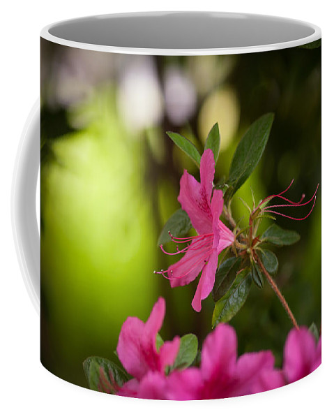 Flower Coffee Mug featuring the photograph Brilliant Beauty by Mike Reid