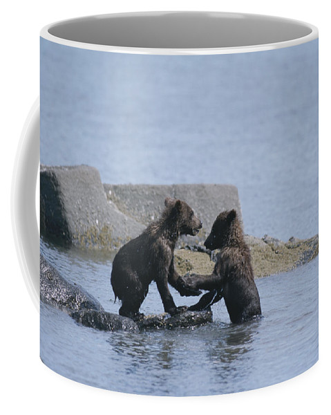 Animals Coffee Mug featuring the photograph Brown Bear Cubs Playing On A Rocky by Tom Murphy