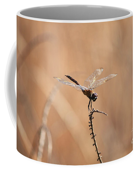 Dragonfly Coffee Mug featuring the photograph Brown Dragonfly And Brown Reeds by Carol Groenen