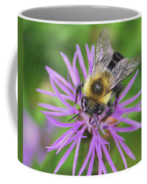 Bumblebee Coffee Mug featuring the photograph Bumblebee On A Purple Flower by Laurel Talabere