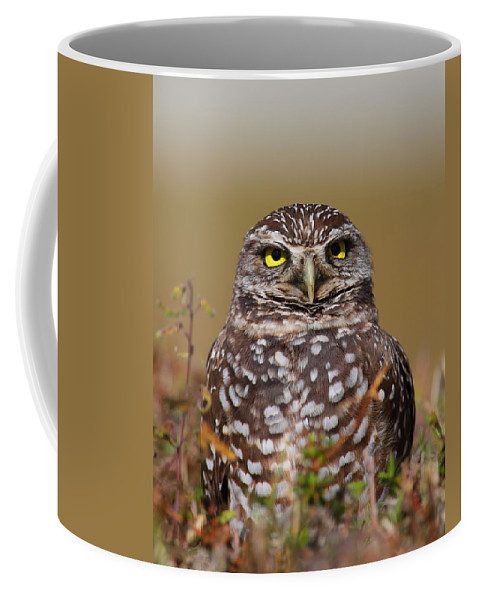 Owls Coffee Mug featuring the photograph Burrowing Owl II by Bruce J Robinson