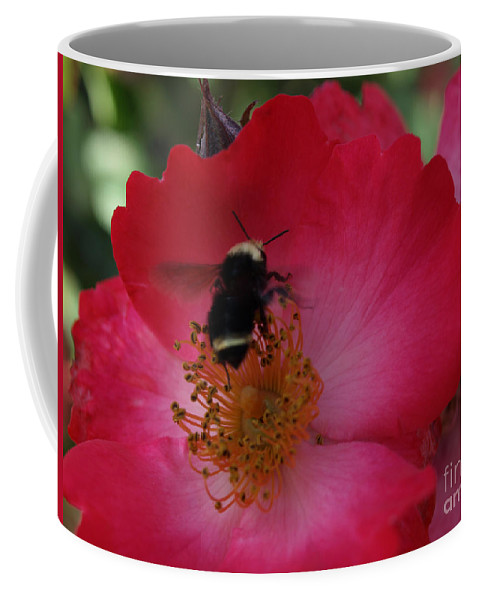 Bee Coffee Mug featuring the photograph Busy Afternoon by Jacklyn Duryea Fraizer