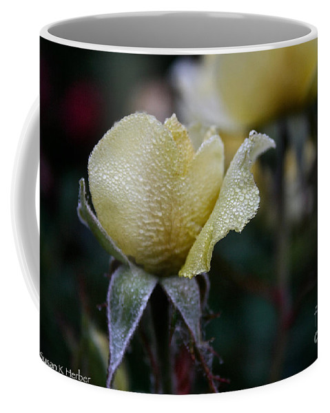 Flower Coffee Mug featuring the photograph Buttercream Petals by Susan Herber
