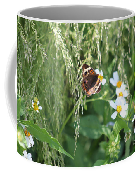 Butterfly Coffee Mug featuring the photograph Butterfly 11 by Michelle Powell