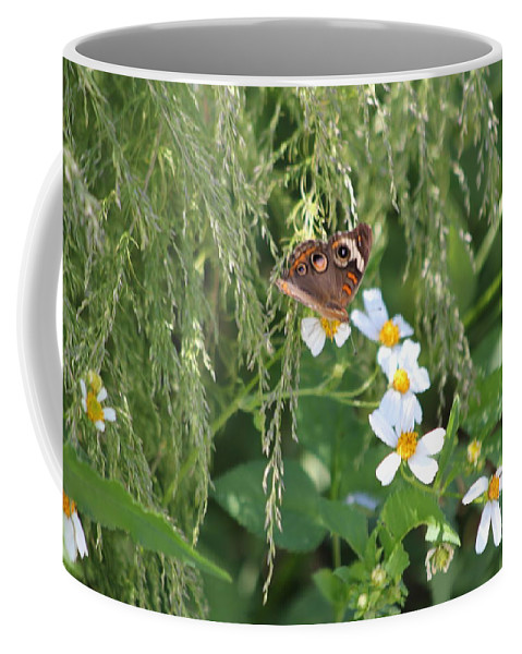 Butterfly Coffee Mug featuring the photograph Butterfly 15 by Michelle Powell