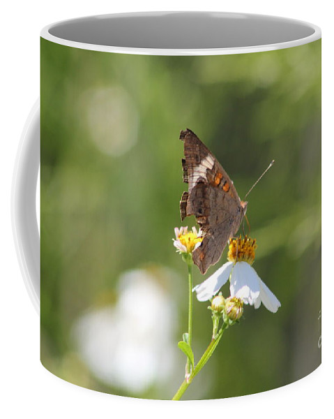 Butterfly Coffee Mug featuring the photograph Butterfly 3 by Michelle Powell