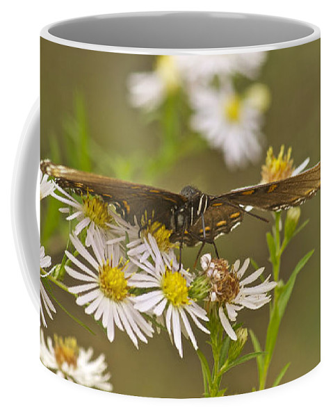 Butterfly Coffee Mug featuring the photograph Butterfly 3319 by Michael Peychich