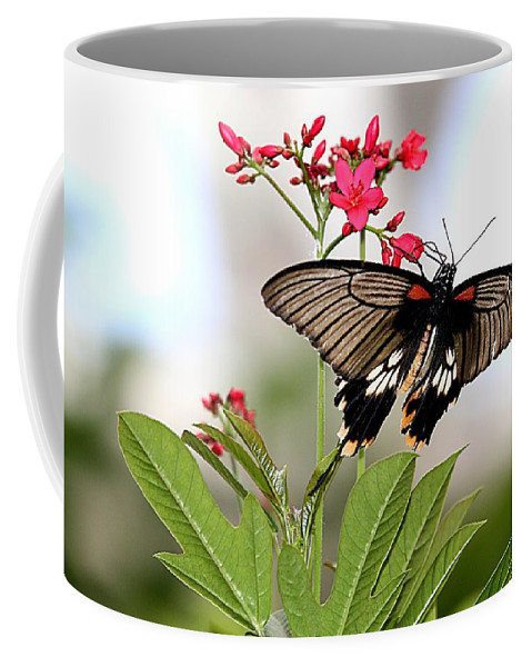 Butterfly Coffee Mug featuring the photograph Butterfly Candy by Elizabeth Winter