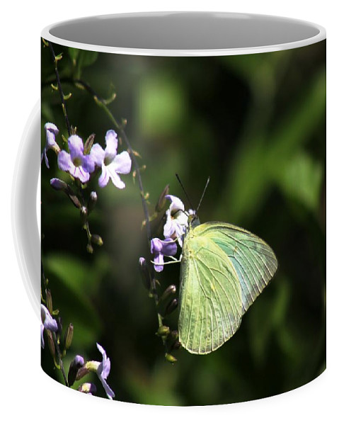 Butterfly Coffee Mug featuring the photograph Butterfly On Purple Flower by Ramabhadran Thirupattur