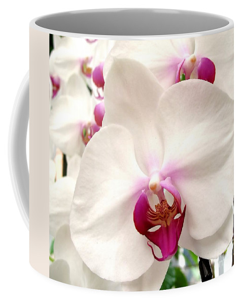 Orchid Coffee Mug featuring the photograph Butterfly Orchids Closeup by Yali Shi