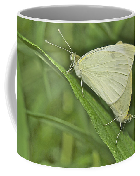 Animal Coffee Mug featuring the photograph Cabbage White Butterflies 5267 by Michael Peychich