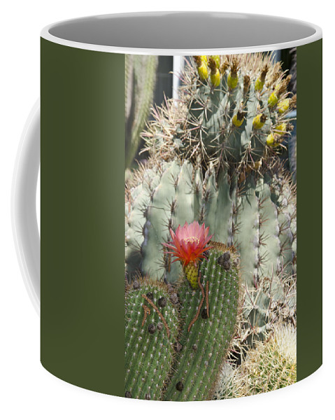 Cactus Coffee Mug featuring the photograph Cactus by Jim And Emily Bush