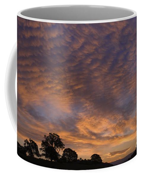 Sandra Bronstein Coffee Mug featuring the photograph California Oaks And Sunrise by Sandra Bronstein
