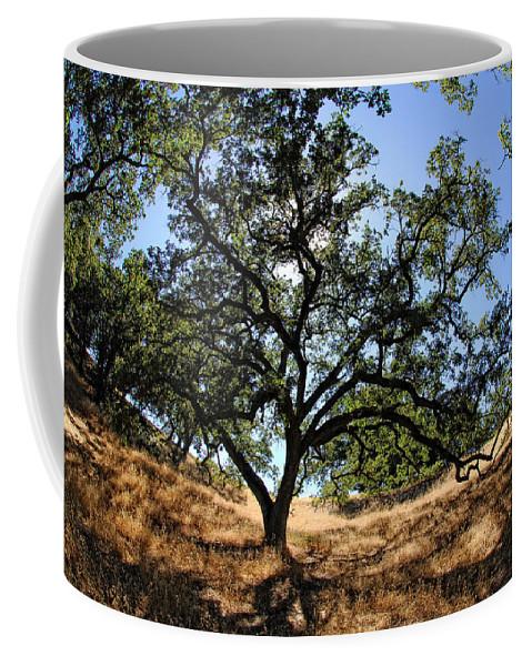 California Coffee Mug featuring the photograph California Oaks by Donna Blackhall