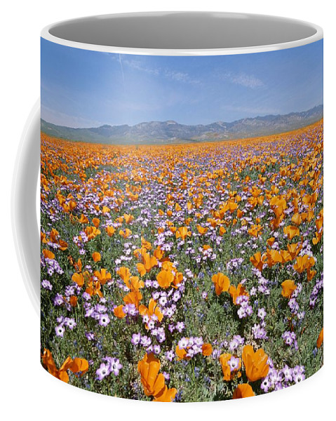 North America Coffee Mug featuring the photograph California Poppies And Other by Rich Reid