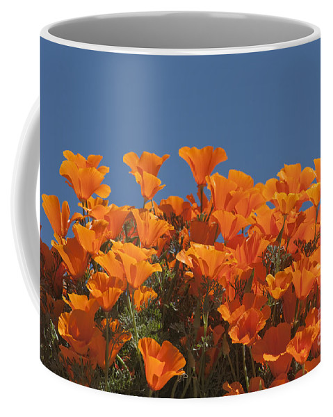 Sandra Bronstein Coffee Mug featuring the photograph California Poppies by Sandra Bronstein