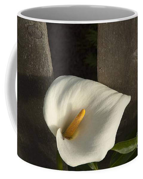 Sandra Bronstein Coffee Mug featuring the photograph Calla Lily And Fence by Sandra Bronstein