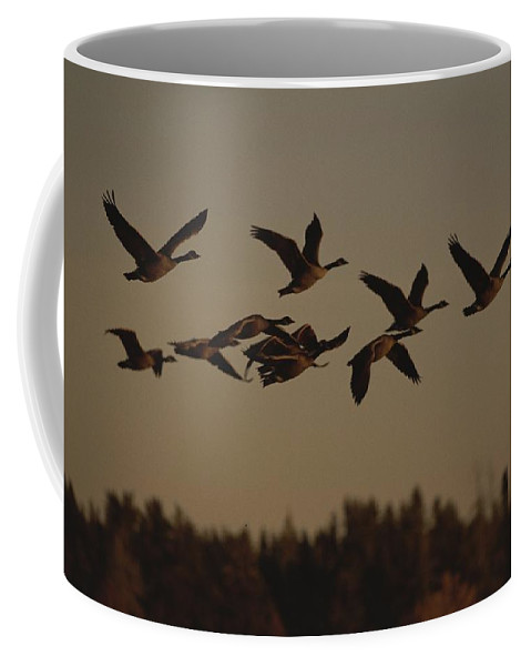 North America Coffee Mug featuring the photograph Canada Geese Fly In A Group by Raymond Gehman