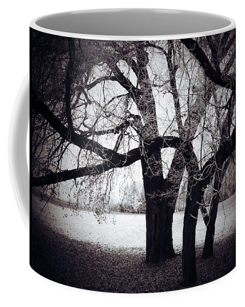 Elm Framed Prints Framed Prints Coffee Mug featuring the photograph Captions Cradle by The Artist Project