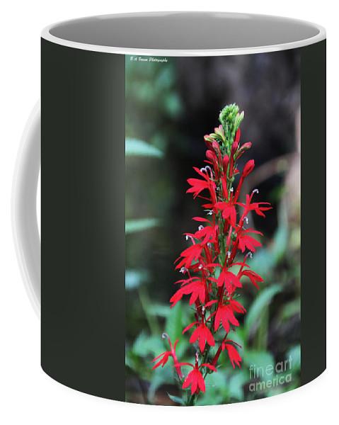 Cardinal Flower Coffee Mug featuring the photograph Cardinal Flower by Barbara Bowen