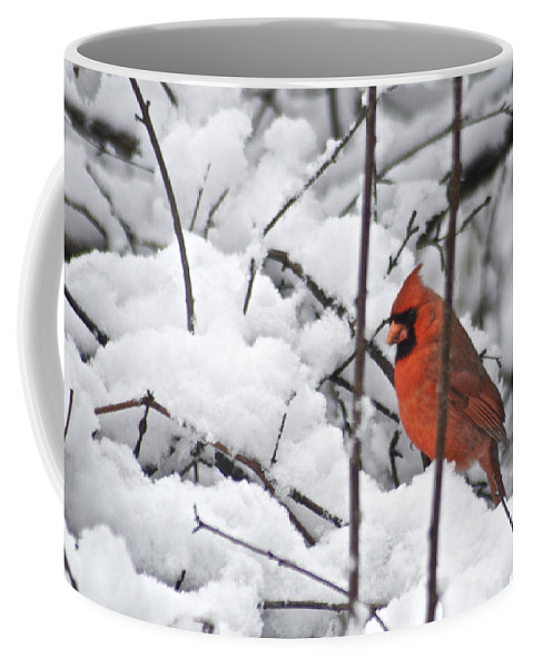 Adult Coffee Mug featuring the photograph Cardinal Male 3669 by Michael Peychich