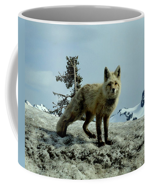 Cascade Red Fox Coffee Mug featuring the photograph Cascade Red Fox 2 by Peter Mooyman