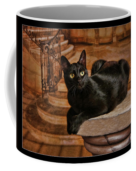 Art Photography Coffee Mug featuring the photograph Cat On Pillar by Blake Richards
