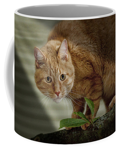 Art Coffee Mug featuring the photograph Cat Out On A Limb by Randall Nyhof