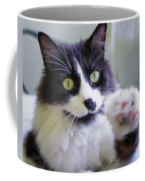 K-r Coffee Mug featuring the photograph Cat Reaches For Camera by Lori Coleman