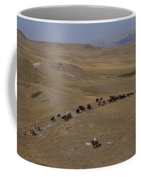 North America Coffee Mug featuring the photograph Cattle Drive In Montana by Annie Griffiths