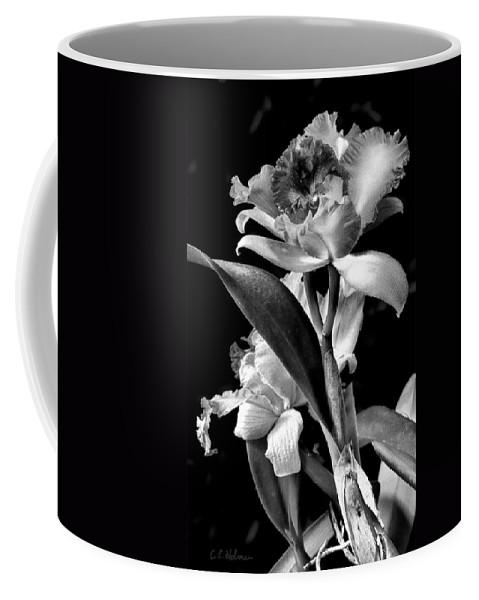 Cattleya Coffee Mug featuring the photograph Cattleya - Bw by Christopher Holmes
