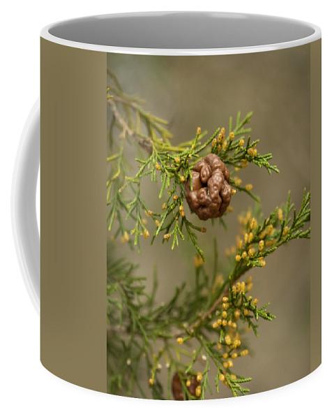 Gymnosporangium Juniperi-virginianae Coffee Mug featuring the photograph Cedar Rust Gall - Gymnosporangium Juniperi-virginianae by Kathy Clark
