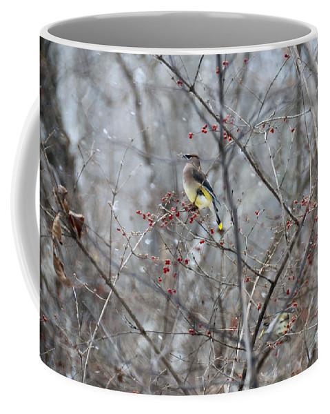 Bird Coffee Mug featuring the photograph Cedar Wax Wing 3 by David Arment