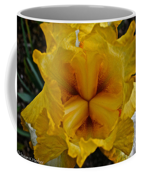 Plant Coffee Mug featuring the photograph Center Point by Susan Herber