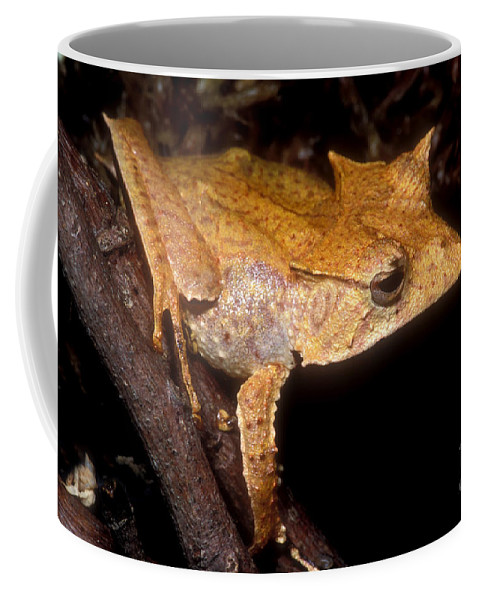 Hemiphractus Coffee Mug featuring the photograph Central American Casque Headed Frog by Dante Fenolio