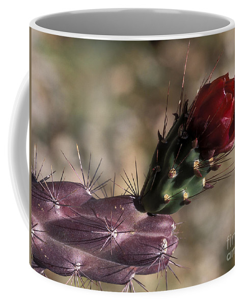 Sandra Bronstein Coffee Mug featuring the photograph Chain Cholla Cactus Bloom by Sandra Bronstein