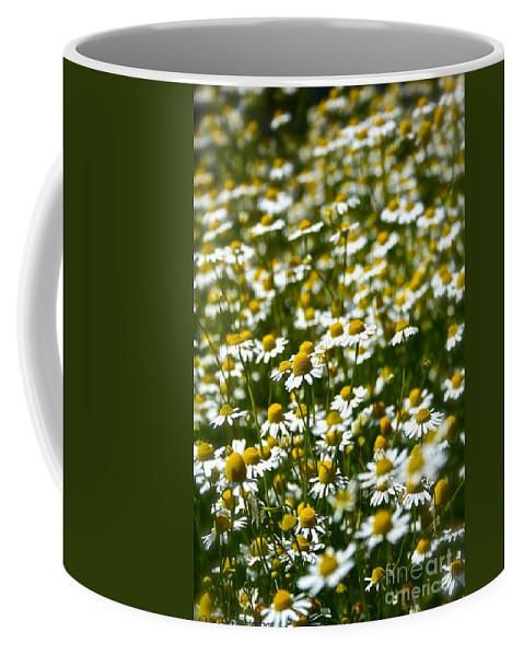 Flower Coffee Mug featuring the photograph Chamomile Fields by Susan Herber
