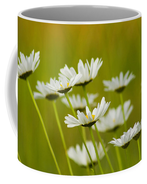 Leucanthemum Vulgare Coffee Mug featuring the photograph Cheerful Daisy Wildflowers Blowing In The Wind by Kathy Clark