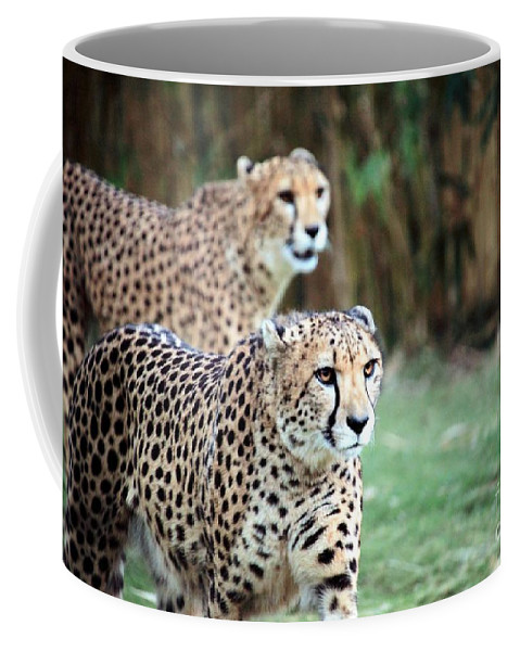 Cheetah Coffee Mug featuring the photograph Cheetah Brothers by Randy Matthews