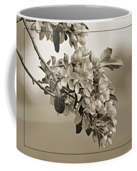 Nature Coffee Mug featuring the photograph Cherry Blossoms Sepia by Debbie Portwood
